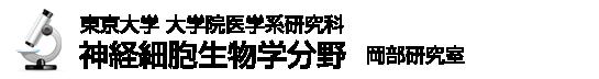 東京大学大学院医学系研究科・医学部 神経細胞生物学(岡部繁男研究室)
